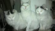 дарю кошек дарю кошек